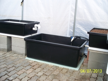 Two Grow Tub System with Medium Fish Tub | Home Systems